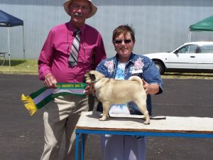 Saxten Sava Runner up in Show All Breeds at just 7 months of age